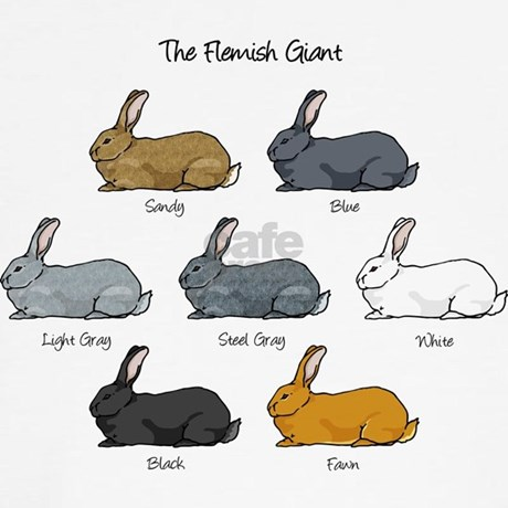 flemish giant color chart submited images