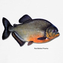 Red-Bellied Piranha Fish (Front) T