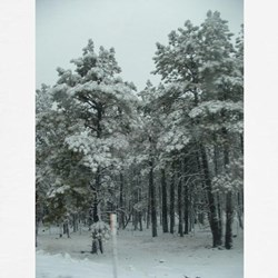 Winter Storm in Sedona, AZ T