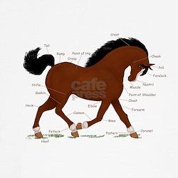 Bay Pony Anatomy Chart T