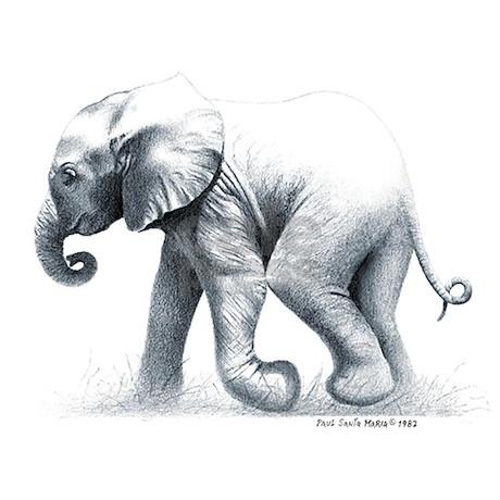 baby elephant ceramic travel mug jpg height 460 amp width 460 amp padToSquare    Pencil Drawings Of Baby Elephants