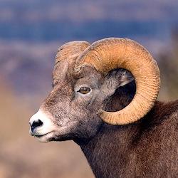 Cute Horn T