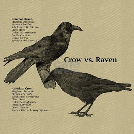 how to get rid of crows and ravens