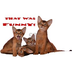 That was funny Aby cat Tee