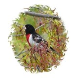 Rose-breasted Grosbeak Mug
