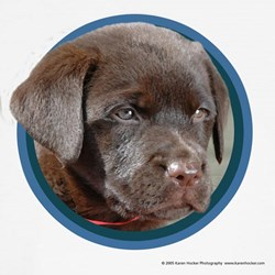 Chocolate Lab Puppy T