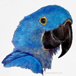 Hyacinth Macaw Kids T-Shirt