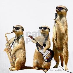 Meerkat Trio2 Shirt
