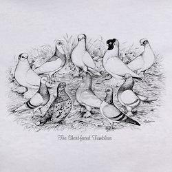 Shortface Tumbler Pigeons Tee