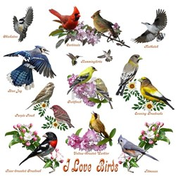 I love Birds Tee