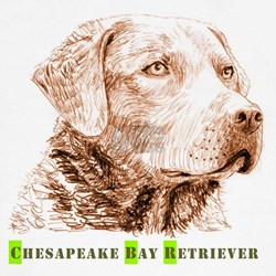 Chesapeake Bay Retriever T