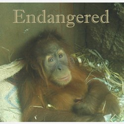 Endangered Tee