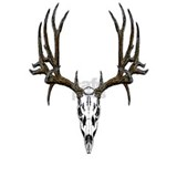 Mule deer skull Wrapped Canvas Art