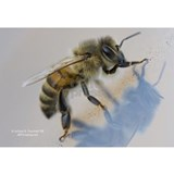 Bee Wall Decals