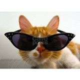 Cool Cat In Sunglasses Kitty Koolness Mug