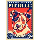 Pit bull Posters