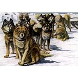 Sled dog Wall Decals