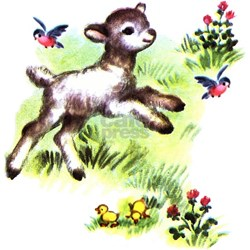 Cute Baby Lamb Sheep Tee