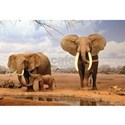 Safari animal Framed Prints