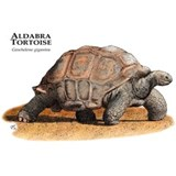 Aldabra Tortoise Water Bottle
