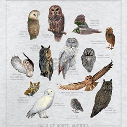 Owl T Shirts, Shirts & Tees | Custom Owl Clothing