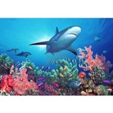 Coral reef Framed Prints