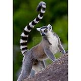 Lemurs Wrapped Canvas Art