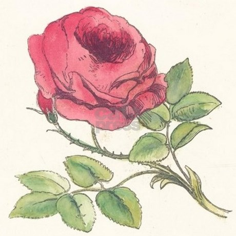 Vintage Rose Drawing T...