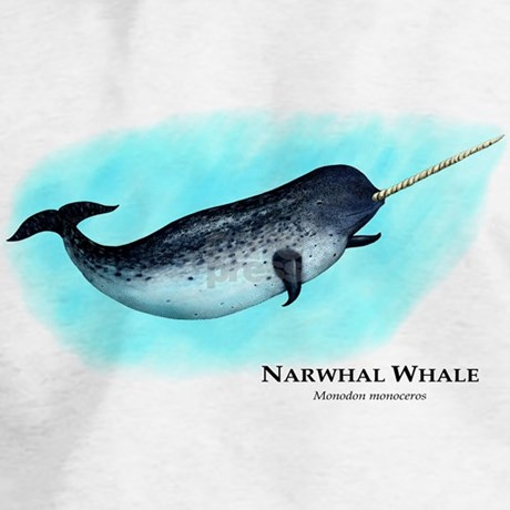 Baby Narwhal Whale The gallery for -->...