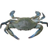 Blue crab T-shirts