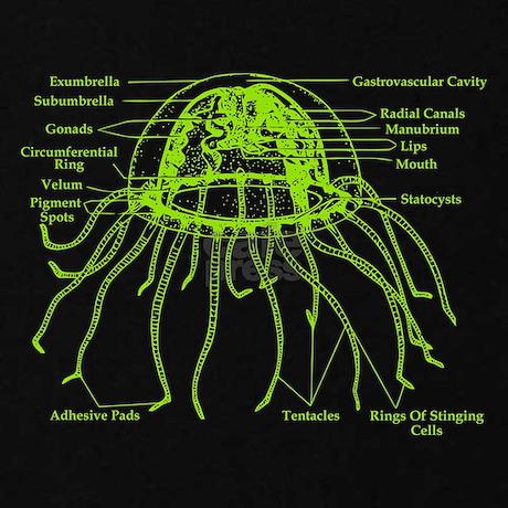 diagram of jellyfish women 39 s plus size v neck dark by. Black Bedroom Furniture Sets. Home Design Ideas