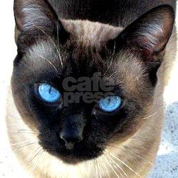 Siamese cat - T-Shirt