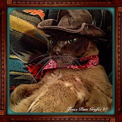 Cowboy Cat, 1, color Tee