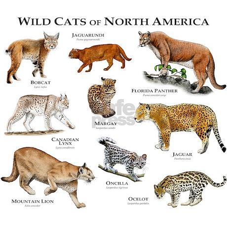 Cat Cafe In North America