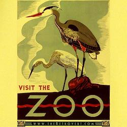 Zoo Herons T