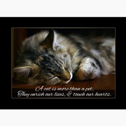 Sympathy Quotes For Loss Of A Child Pet Sympathy Greeting ...