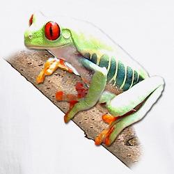 Red Eyed Tree Frog III Shirt