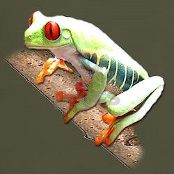 Red Eyed Tree Frog III T-Shirt