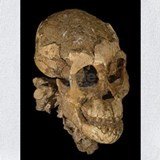Australopithecus Bib