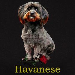 Havanese Valentine Rose Ebony Tee