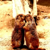 Love and Kissing Prairie Dog Mugs