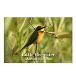 Little Bee-eater Postcards (Package of 8)
