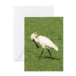 Eurasian Spoonbill Greeting Card
