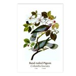Band-tailed Pigeon Postcards (Package of 8)