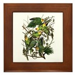 Audubon's Carolina Parakeet Framed Tile