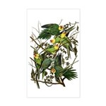 Audubon's Carolina Parakeet Rectangle Sticker