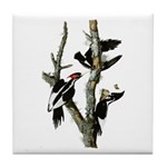 Ivory-billed Woodpecker Tile Coaster