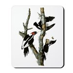 Ivory-billed Woodpecker Mousepad