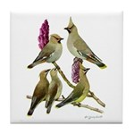 Fuertes' Waxwings Tile Coaster