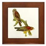 Red-shouldered Hawk Framed Tile